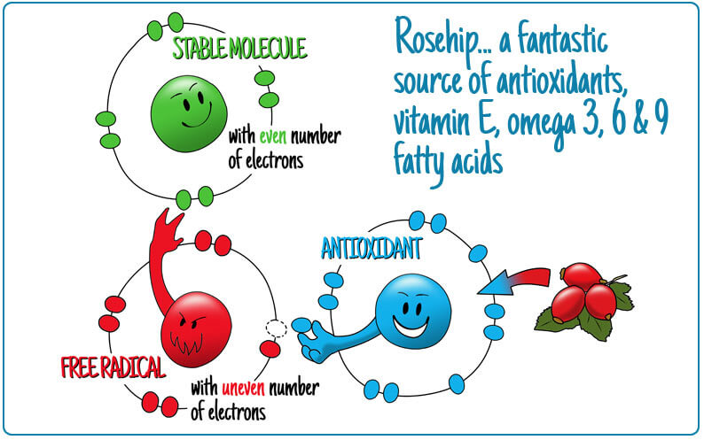 free radicals stable and antioxidants