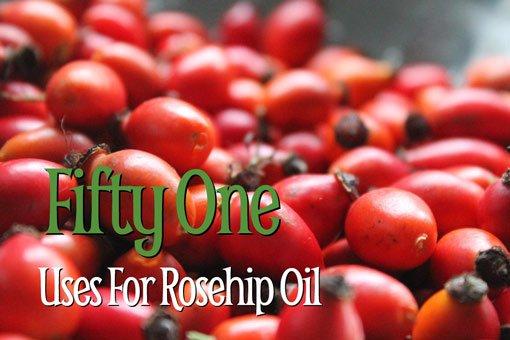 Rosehip oil fruit