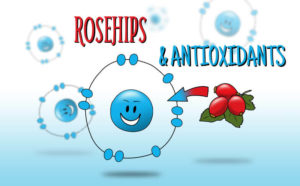 rosehip and antioxidants