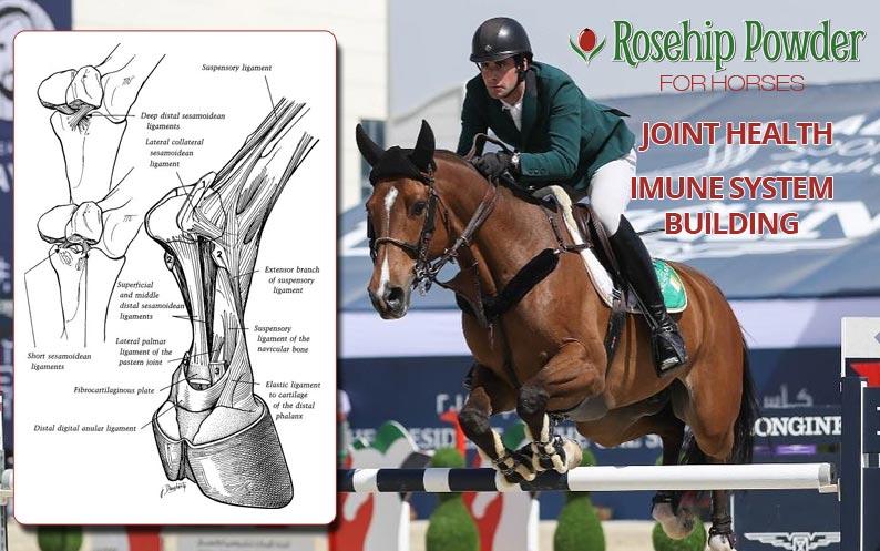 Rosehip powder for horses