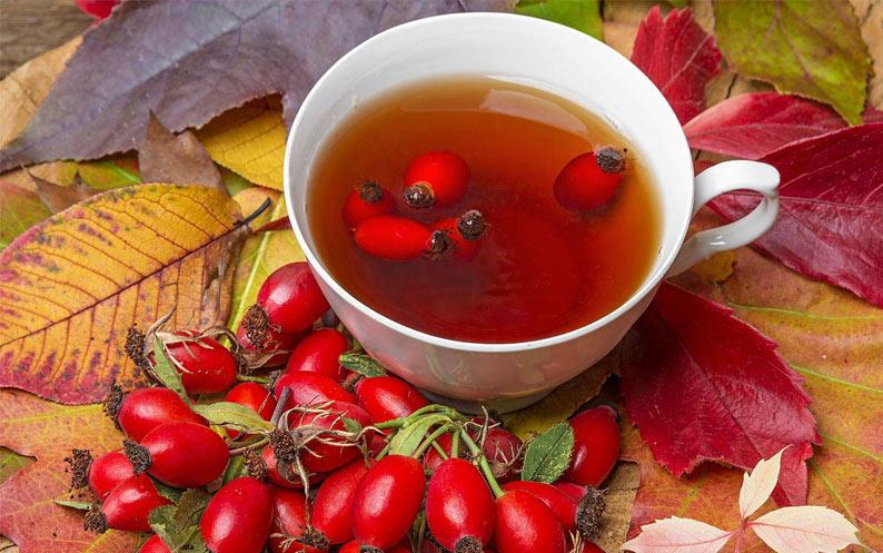 Rosehip tea Rosa canina