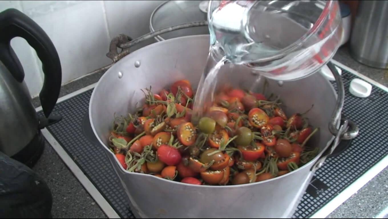 rosehips in pot