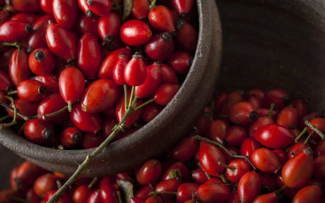 ROSEHIP: THE HEALTHY WINTER FRUIT THAT HAS IT ALL!